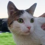 Περσέας η πρώτη γάτα με τεχνητά άκρα
