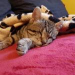 οδηγίες για τυφλή γάτα