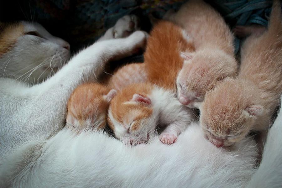 Πότε η γάτα διώχνει τα γατάκια της