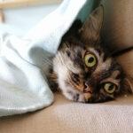 Αδέσποτη γάτα στο σπίτι